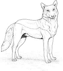 Free Wolf Colouring Pages