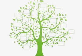 l arbre a cadre cadre de l arbre cadre de l arbre cadre photo l arbre de