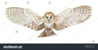 Flying Barn Owl Vector Image Stock Vector 380339767 - Shutterstock Barn Owl Tyto Alba 4 Months Old Flying Stock Photo Image Beauty Of Bird Our Barn Owl The Tea Rooms Chat Rspb Community A Flying At Folly Farm In Pembrokeshire West Wales Winter Spirit By Hontor On Deviantart Audubon Field Guide Vector 380339767 Shutterstock Wallpaper 12x800 Hunting A Royalty Free Tattoos Tattoo Ideas Proyectos Que Debo Ientar