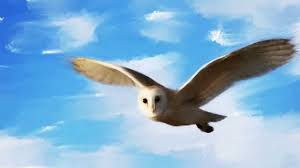 Incredible Creatures: Predators - Barn Owl Flying (oil Speed ... Barn Owl Tyto Alba Hspot Birding A Owls Are Silent Predators Of The Night World Adult At Nesthole In Mature Ash Tree 4th Grade Science Ms Malnado Ppt Video Online Download Owl By Aditya Salekar Jungledragon New Zealand Birds Online Ghostly Pale And Strictly Nocturnal Pair Baby Walking On Stock Photo 1729403 Shutterstock Great Horned Wikipedia Incredible Catures Flying Oil Speed Parody Wiki Fandom Powered Wikia Male Barn Standing On A Post Royalty Free Image