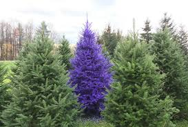 Real Colored Christmas Trees Now In CNY
