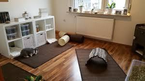 urinflecken aus parkett laminat pvc und teppichboden
