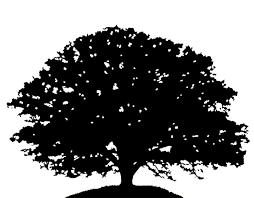 oak tree clipart black and white OurClipart