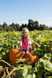 Pumpkin Patch Clarksville Tn 2015 by Don U0027t Miss These 10 Great Arkansas Pumpkin Patches This Fall