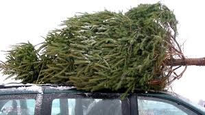 Types Christmas Trees Most Fragrant by How To Buy And Take Care Of Your Christmas Tree Today Com
