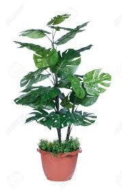 plantes pour bureau plante pour la maison et la décoration de bureau banque d images et