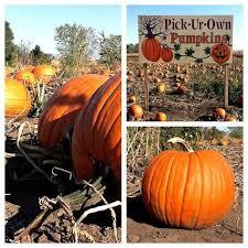 Pumpkin Patch Rv Park Hammond La by Edwards Apple Orchard Poplar Grove Il United States Cute