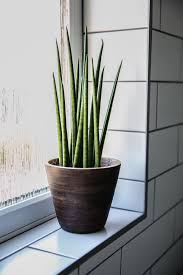 Pot Plants For The Bathroom by Bathroom Goals Ej Style