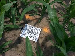 Lodi Pumpkin Patch Wisconsin by Heated Discussion Over Golden Spiral Treinen Farm Corn Maze