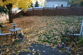 Glorious Autumn In My Minnesota Backyard | Minnesota Prairie Roots Evergreen Winter Damage Learn About Treating And Preventing Cheat With Low Tunnels Fall Leaf Burn Youtube Fire Pit Safety Maintenance Guide For Your Backyard Installit Outdoor Burning Nonagricultural Bay Leaves In The House And See What Happens After 10 Minutes Tips For Removing Poison Ivy Bush Insect Pests How To Identify Treat Bugs That Eat To Guidelines Infographic Dont Holly Hollies With Scorch Glorious Autumn My Minnesota Backyard Prairie Roots April Month Powell River Today