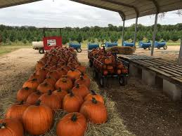 Pumpkin Patch Bastrop County by 9 Central Texas Day Trips To Celebrate Fall Austin Amplified