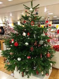 Nordmann Fir Christmas Trees Wholesale by John Lewis At Christmas Ananyah