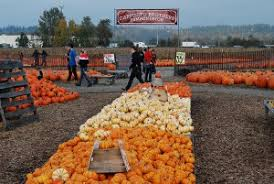 Auburn Pumpkin Patch by Carpinito Brothers Pumpkin Patch In Kent Seattle Recreation