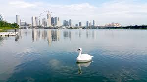 Researchers In Singapore Deploy Robot Swans To Test Water Quality ... Jayco Swan Camper Trailer Official Video Youtube Researchers In Singapore Deploy Robot Swans To Test Water Quality Casey Ware Vase 13 X 8 Cm Burgundy Ceramic Treats And Two On Golden Stock Image Image Of Reflected 73290927 Car Wrecker Valley Perth Cash For Cars Removal Suburbs Schwans Trucking Fleet Gets A Makeover Business Wire Migrating Tundra Privsation Waste Management A French Takeover Home Food Delivery Is Hot But Has Done It 65 Years Brockway Trucks Message Board View Topic Pic The The Legacy Campbell River Community Mourns Passing Friendly Estuary Swan