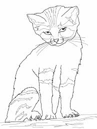 Beautiful Cat Coloring Page 78 For Download Pages With