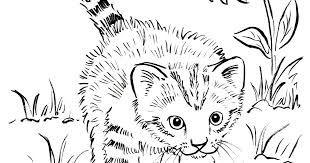 Adult Coloring Pages Kittens Kitten Page Bell Cute Colouring