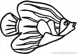 Angelfish 7 Coloring Page