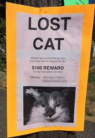 Lost Cat Poster Pat The