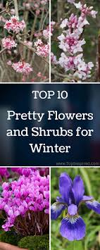 50 Best Fragrant Winter Flowering Plants Images On Pinterest ... 484 Best Gardening Ideas Images On Pinterest Garden Tips Best 25 Winter Greenhouse Ideas Vegetables Seed Saving Caleb Warnock 9781462113422 Amazoncom Books Small Patio Urban Backyard Slide Landscaping Designs Renaissance With Greenhouse Design Pafighting Fall Lawn Uamp Gardening The Year Round Harvest Trending Vegetable This Is What Buy Vegetables Fresh And Simple In Any Plants Home Ipirations