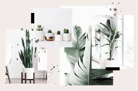 100 Interior Minimalist 15 Perfect Plants For S JUNIPEROATS