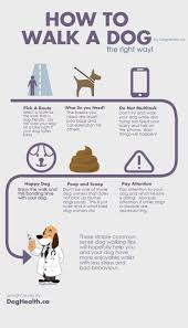 Dogs That Dont Shed Bad by 141 Best Dog Infographics Images On Pinterest Infographics Cute
