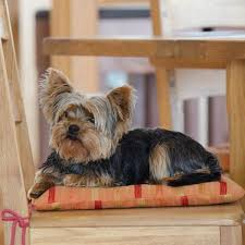 Terriers That Dont Shed by 5 Dog Breeds That Don U0027t Shed Hair Animalwised