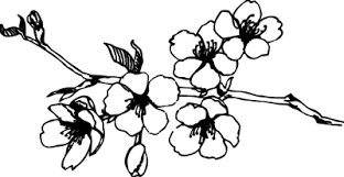 Cherry Blossom clipart black and white 2