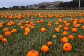Pahls Pumpkin Patch by Collection Halloween Pumpkin Patch Pictures Halloween Ideas