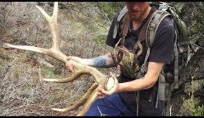 2016 utah wasatch front hard core elk moose shed hunting part 2