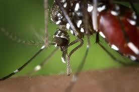 milder winter und mücken gut für die mücken oder die