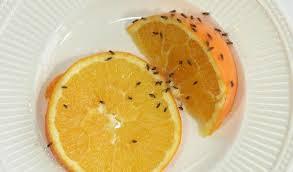 comment faire partir des moucherons dans une cuisine que faire contre les mouches à fruits passionsanté be