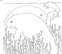 West Indian Manatee Coloring Page
