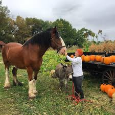 Colorado Springs Pumpkin Patch 2017 by Pumpkins At The Covered Bridge Ranch Outthere Colorado