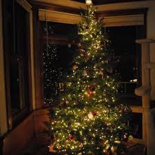Santa Cruz County Christmas Tree Farms by Black Road Christmas Tree Farms Temp Closed 18 Photos U0026 24