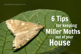 6 Ways to Keep Miller Moths Out of Your House • The Prairie Homestead