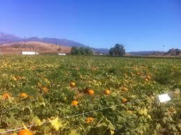 Oak Glen Pumpkin Patch Yucaipa by Glen Pumpkin Patch Yucaipa Hours To Days
