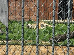 A Truck Stop Is No Place For A Tiger! Why We Won't Stop Fighting For ...