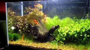 My 20 Gallon Aquascaping Planted Tank - YouTube Aquascaping Aquarium Ideas From Aquatics Live 2012 Part 2 Youtube How To Make Trees In Planted Aquarium The Nature Style Planted Tank Awards Ultimate Shop In Raipur Fuckyeahaquascaping My 90p Tank One Month See Day 1 Here Best 25 Ideas On Pinterest Home Design Designs Aquascape Happy Journey By Adil Chaouki 1ft Cube Aquascaping Fuck Yeah Anyone Do For Your Fish Srt Hellcat Forum Archives Javidecor
