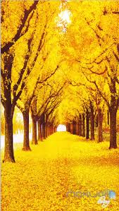Wall Mural Decals Nature by 3d Yellow Leaves Fall Tree Corridor Entrance Wall Mural Decals Art