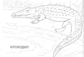 Download Coloring Pages Wild Animal Eassume Free Book