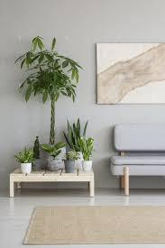 pflanzen auf holztisch neben grauem sofa im skandi wohnzimmer i foto bialasiewicz auf envato elements