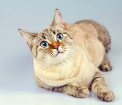 signs of worms in cats 10 signs that prove your cat has worms bestvetcare