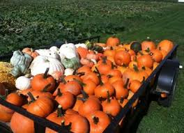 Pumpkin Patch Puyallup River Road by 26 Best Fantastic Farms Images On Pinterest Washington State