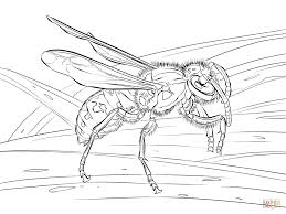 Full Size Of Coloring Pagereal Pages Realistic European Wasp Page New Large