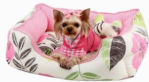 Drs Foster And Smith Dog Beds by Small Breed Dog Beds Dog Beds U2013 Gallery Images And Wallpapers