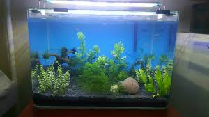 Extra Large Aquarium Ornaments by Planted Tank Maintenance And Bubbles In Tank Soil 271373