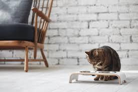 wie mit katze stilvoll wohnt schöner wohnen
