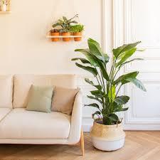 pflanzen für dein wohnzimmer bestelle jetzt nachhaltige
