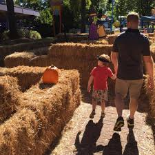 Pumpkin Patch Columbia Sc 2015 by 7 Reasons You U0027ll Love The Great Pumpkin Fest At Carowinds