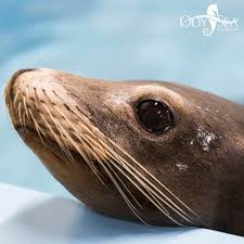 OdySea Aquarium - Local Coupons October 2019 Free Novolog Flexpen Coupon Spell Beauty Discount Code Seaquest Aquarium Escape Room Olive Branch One A Day Menopause Inn Shop Squaw Valley Promo Coach Bags Uk Odysea Aquarium Local Coupons October 2019 Digital Coupons Dillons Acurite Codes Jeans Wordans Ourbus March Dcg Stores Fniture